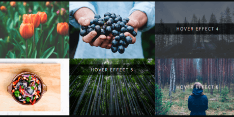 bootstrap hover image effects
