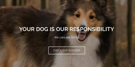 free pets store focused wordpress theme