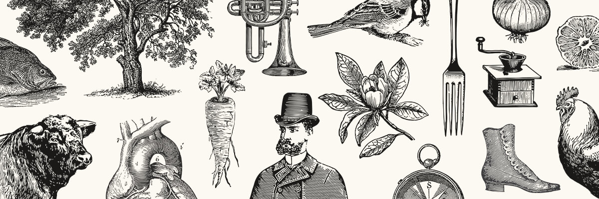 engraving style illustrations featured img