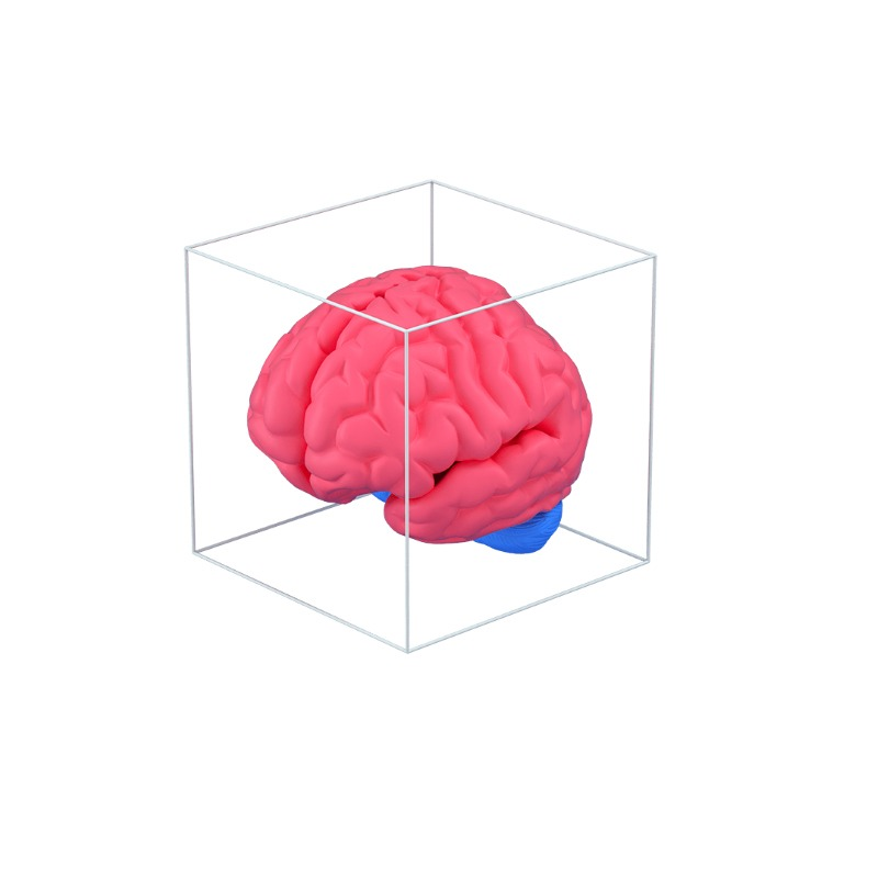 3d icon of a human brain