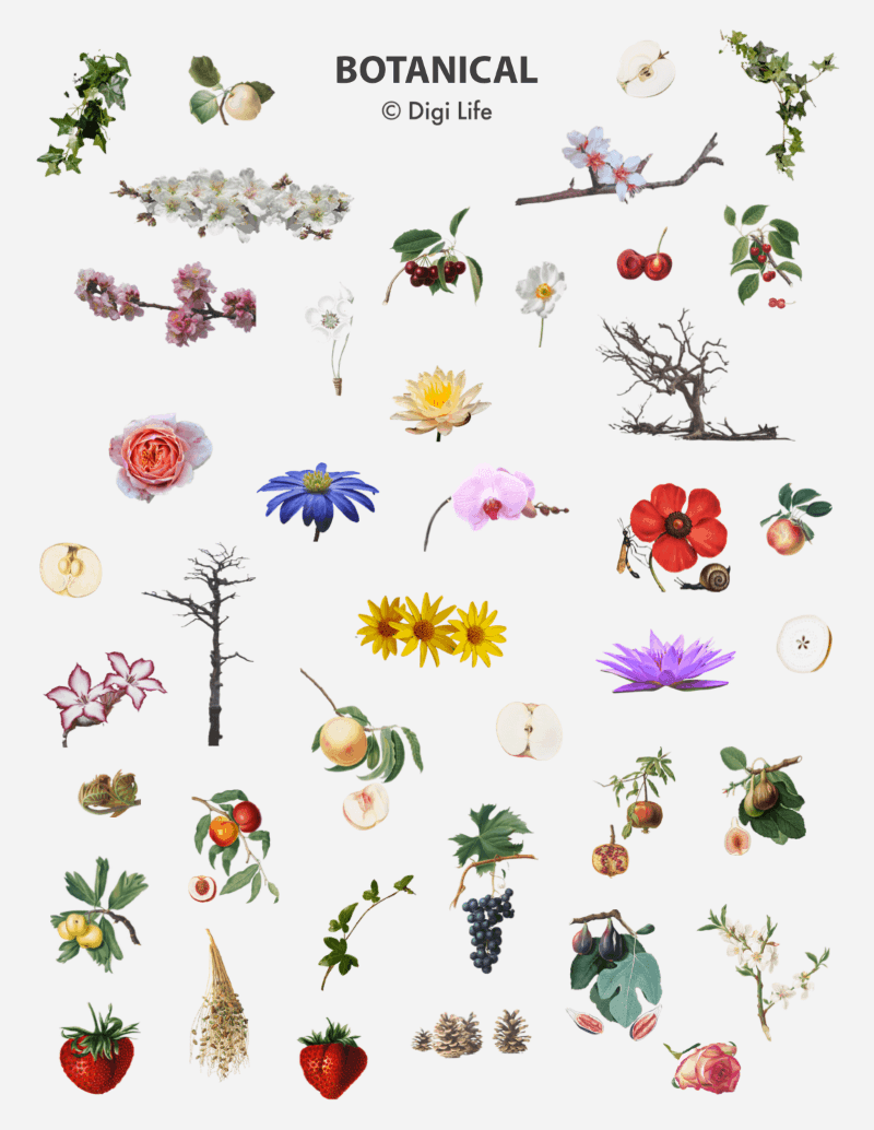 cover image displaying various collage elements, cutout on with transparent backgrounds